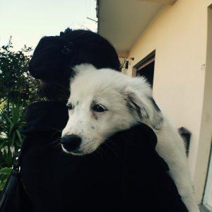 carry sweet dog