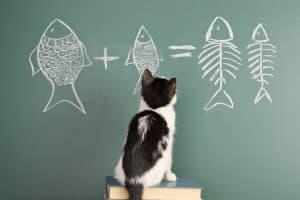 catfish learn value longing lust