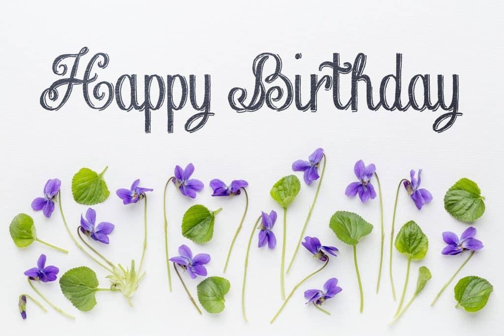 happy birthday violets