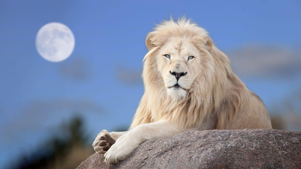 aquarius full moon lion